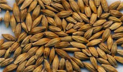 Семена озимого ячменя урожая 2016 ЭС, РС-1
