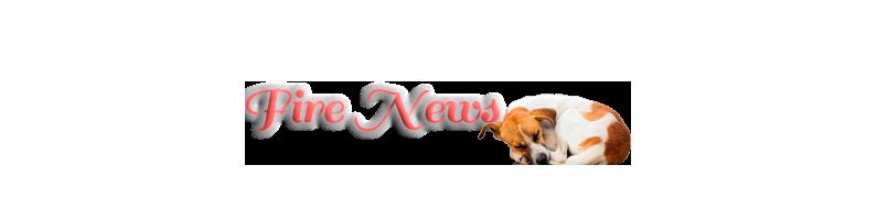 Развлекательный портал Fire News.