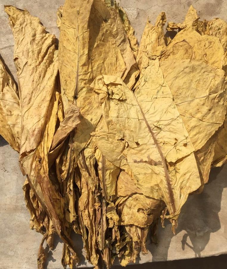 Продаем табачное сырье