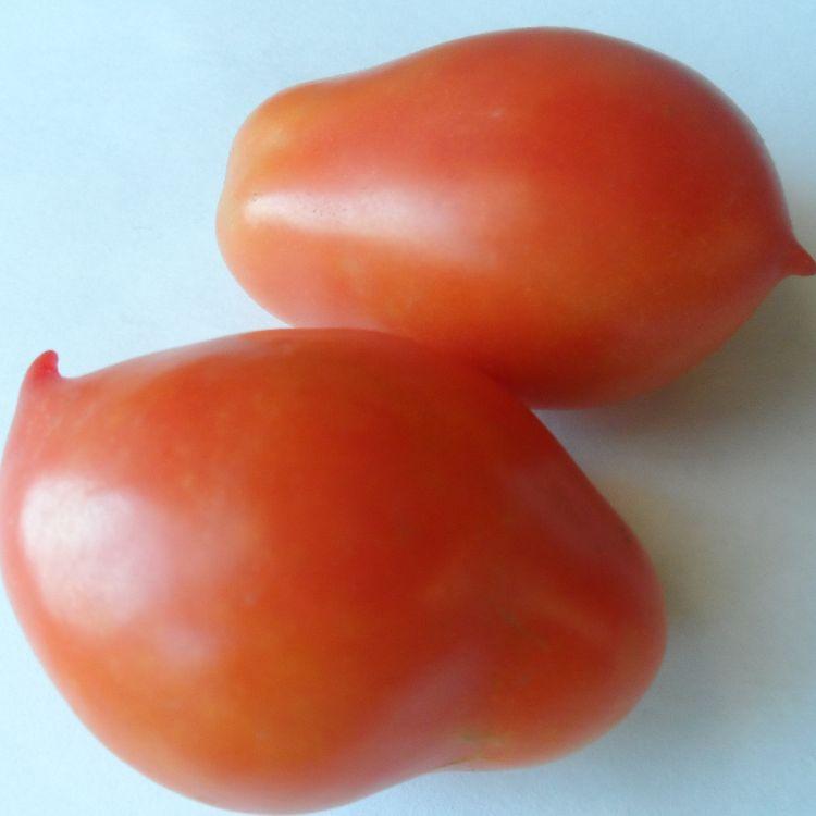 Старинные сорта томатов, семена на сайте скороспелка.рф
